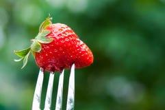 Świeża czerwona truskawka Fotografia Stock