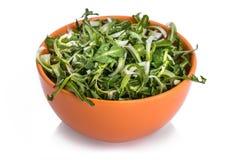 Świeża dandelion sałatka Zdjęcia Stock