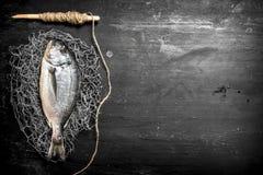 Świeża denna ryba na sieci rybackiej Fotografia Stock