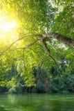 Świeża drzewo zieleni natura zdjęcie stock
