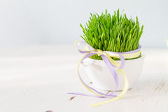 Świeża Easter trawa w białym garnku, drewniany tło Fotografia Stock