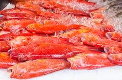 Świeża egzot ryba na lodzie w owoce morza rynku na Boracay wyspie Obrazy Stock