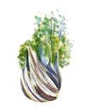Świeża fenhel ilustracja Ręka rysująca akwarela na białym tle Zdjęcia Stock