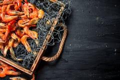 Świeża garnela w sieci rybackiej na tacy Zdjęcie Stock