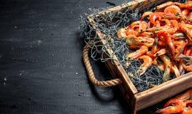 Świeża garnela w sieci rybackiej na tacy Obrazy Stock