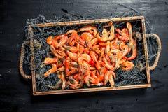 Świeża garnela w sieci rybackiej na tacy Obraz Royalty Free