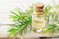 Świeża herbaciana drzewna gałązka i istotny olej na drewnianej desce obrazy royalty free