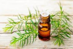 Świeża herbaciana drzewna gałązka i istotny olej na drewnianej desce obraz royalty free