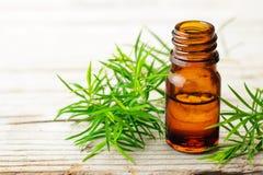 Świeża herbaciana drzewna gałązka i istotny olej na drewnianej desce zdjęcia stock
