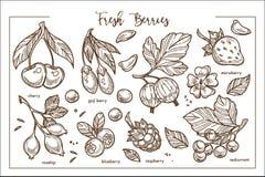 Świeża jagoda na gałąź z liśćmi i okwitnięcie monochromu kolekcją ilustracji