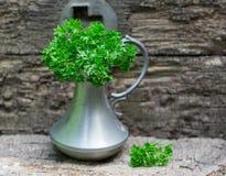Świeża kędzierzawa organicznie pietruszka Obraz Royalty Free
