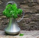 Świeża kędzierzawa organicznie pietruszka Zdjęcia Royalty Free