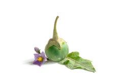 Świeża karakan jagoda na białym tle Zdjęcia Royalty Free
