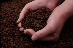 świeża kawa fasoli Zdjęcie Royalty Free