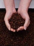 świeża kawa fasoli Obraz Royalty Free