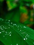 Świeża kropla woda na zielonym liściu Obraz Stock
