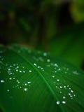 Świeża kropla woda na zielonym liściu Zdjęcia Stock