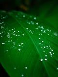 Świeża kropla woda na zielonym liściu Fotografia Royalty Free