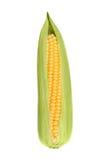 Świeża kukurudza na białym tła zbliżeniu Fotografia Royalty Free