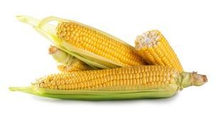 Świeża kukurudza z zielonymi liśćmi Obrazy Stock