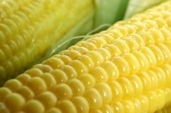 świeża kukurydza Obraz Royalty Free