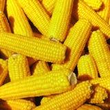 świeża kukurydza Zdjęcia Royalty Free
