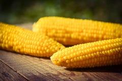 świeża kukurydza Obrazy Stock