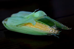 świeża kukurydza Fotografia Stock