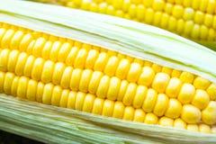 świeża kukurydza Fotografia Royalty Free