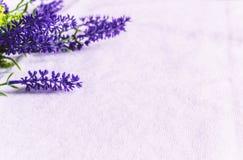 Świeża lawenda kwitnie na białym tkaniny tle obrazy stock