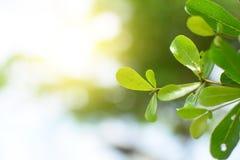 Świeża liść zieleń z miękkim światłem fotografia royalty free