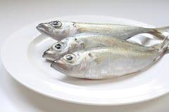 Świeża makrela na talerzu Fotografia Stock