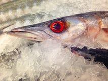 Świeża makrela w rynku obrazy royalty free