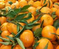 Świeża mandarynka z liśćmi obrazy stock