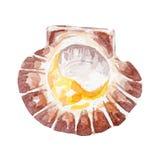 Świeża milczek ilustracja Ręka rysująca akwarela na białym tle Fotografia Royalty Free
