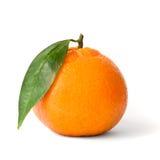 świeża odosobniona mandarynka zdjęcia stock