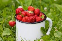 Świeża ogrodowa truskawka w filiżance Fotografia Royalty Free