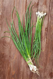 Świeża ogrodowa wiosny cebula Zdjęcie Stock