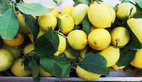 Świeża organicznie i naturalna cytryna z liśćmi na targowym biurku, odgórny widok obraz royalty free