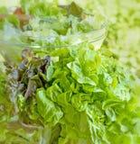 Świeża organicznie sałata Zdjęcie Royalty Free
