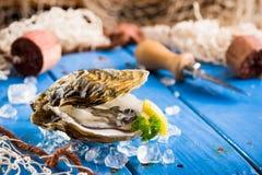 Świeża ostryga na lodzie na błękitnym drewnianym stole fotografia stock