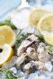 Świeża ostryga z cytryną i kolenderami Ja jest menu dla Zdrowego obrazy royalty free