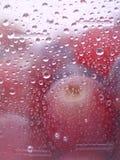 Świeża owoc z kroplą woda. Fotografia Stock