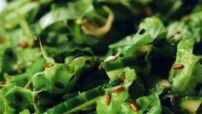 Świeża płodozmienna zielona sałatka zdjęcie wideo