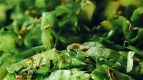 Świeża płodozmienna zielona sałatka zbiory wideo