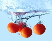 Świeża pomidor gałąź opuszczał w wodę obraz stock