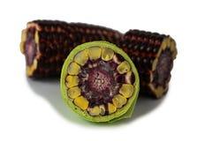 Świeża Purpurowa kukurudza Fotografia Stock