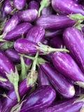 Świeża purpurowa oberżyna Zdjęcie Stock
