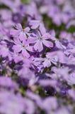 Świeża, różowa wiosna, kwitnie na różowym bokeh tle. Obrazy Royalty Free