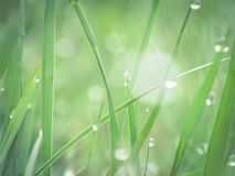 Świeża rosa w ranek trawie Zdjęcie Stock